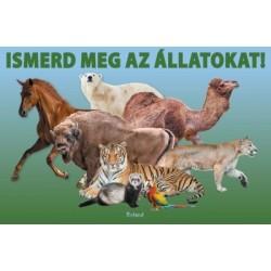 Lengyel Orsolya: Ismerd meg az állatokat!
